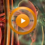 Видеозаклинание «Лечение выделительной системы» для прибора Гекс-1