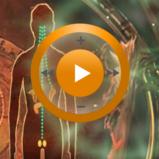 Видеозаклинание «Лечение гормональной системы» для прибора Гекс-1
