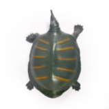 №144 Фамильяр Тотем черепахи