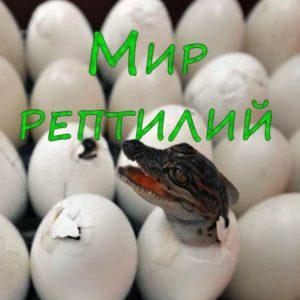 Z053. Мир рептилий