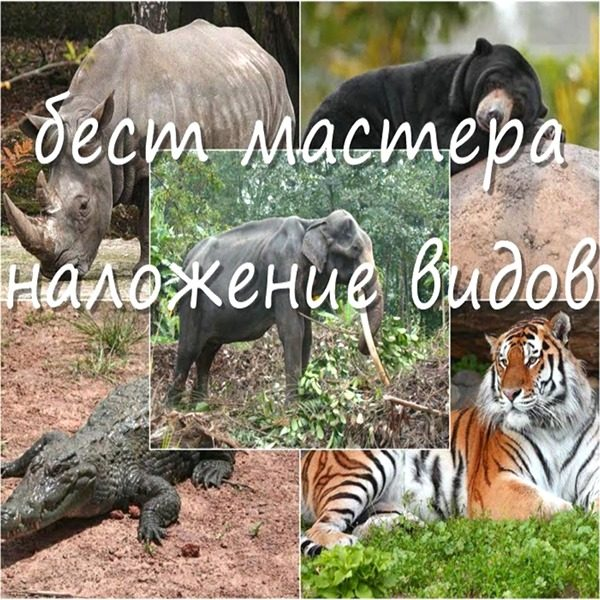 353 Best Mastera Nalozhenie Vidov