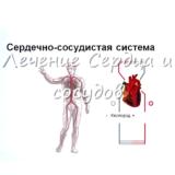 2.1.5. Лечение Сердца и сосудов