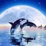 Записи Суперлекции 22.06.19. Суперцивилизация Дельфинов
