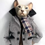 №512 Светский Кот